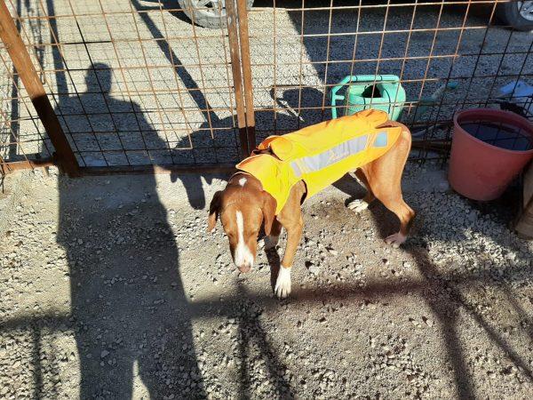 dog vests for hunting
